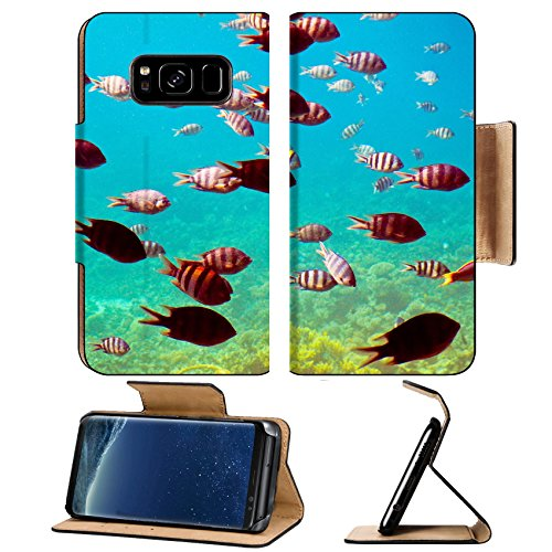 Liili Premium Samsung Galaxy S8 Plus Flip Pu Wallet Case Photo of tropical fishes at coral reef area IMAGE ID 12288977 112 Coral