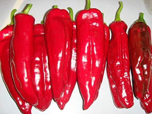 (Rare) Corno di Toro Rosso Pepper - Pure Italian - Deep Crimson Red!(10 - Seeds)