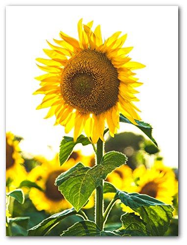 Sunflower Print, Sunflower Wall Art, 8 x 10 Inches, Unframed (Sunflower Kitchen Colours)