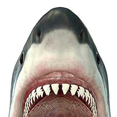 Wallmonkeys Great White Shark Jaws Wall Decal Peel Stick Graphic WM172908