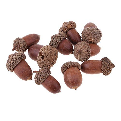 (Prettyia 10 Pieces of Beautiful Acorns Mini Dried Oak Nuts Fruits Home Wedding Christmas Tree Decorations)