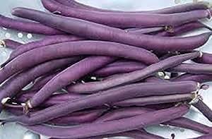 1,350 Royal Burgundy Bush Bean Seed. Approx. 1 lb. + Gift, Combo Ship, Non-GMO