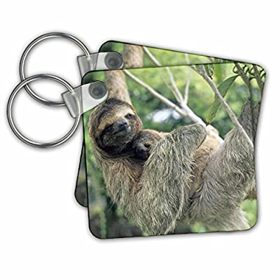 Kc_87218 Danita Delimont - Wildlife - Three-Toed Sloth Wildlife, Corcovado Np, Costa Rica - Sa22 Ksc0137 - Kevin Schafer - Key Chains -