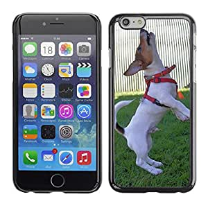 """Hot Style Cell Phone PC Hard Case Cover // M00129918 Dog Dogs Pet Jack Russell Terrier // Apple iPhone 6 PLUS 5.5"""""""