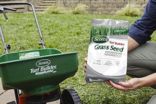 The 8 best lawn grass seeds