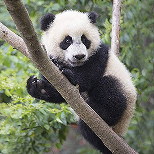 Pandas Calendar Calendar - Calendars 2019-2020 Wall Calendars - Animal Calendar - 16 Month Wildlife Wall Calendar