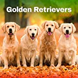 Turner Licensing Turner Photo Golden Retrievers 2020 12X12 Photo Wall Calendar (20998940022)