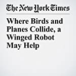 Where Birds and Planes Collide, a Winged Robot May Help | Tina Rosenberg