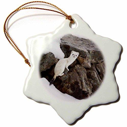 Rose Porcelain Stove - 3dRose orn_141980_1 Short-Tailed Weasel Wildlife, Brooks Range, Alaska, Usa-Us02 Hro0740-Hugh Rose-Snowflake Ornament, 3-Inch, Porcelain