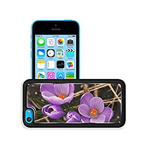 Nature Flowers Crocus Purple Beautiful iPhone 5C Case Customized niuniu's case