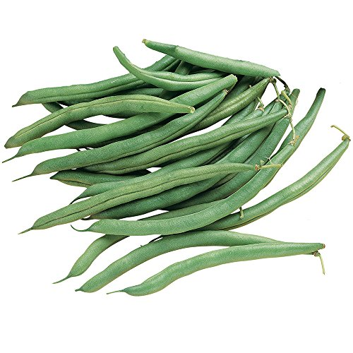 - Burpee Blue Lake 274 Bush Bean Seeds 2 ounces of seed