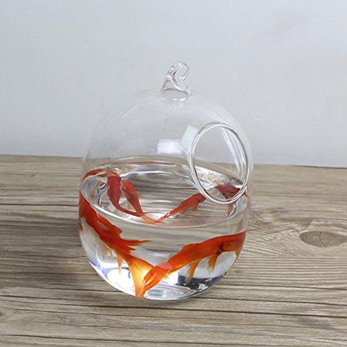 Mishiner Forma Ovalada acuarios Hang Acuario Vidrio Mini borosilicato Vidrio florero pecera hogar decoración: Amazon.es: Productos para mascotas
