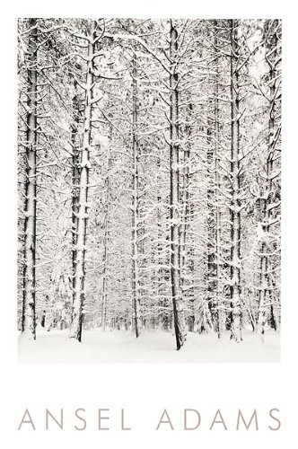 Pine Forest in Snow, Yosemite National Park, 1932 Art Poster Print by Ansel Adams, 24x36 (Ansel Adams Gallery Yosemite National Park)