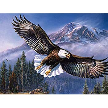 Amazon flying eagle oil painting on canvas modern wall art flying eagle oil painting on canvas modern wall art pictures for home decoration wooden framed altavistaventures Images