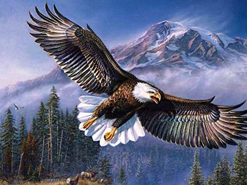 Flying Eagle -Oil Painting On Canvas Modern Wall Art Pictures For Home Decoration Wooden Framed (12X16 Inch, Framed)