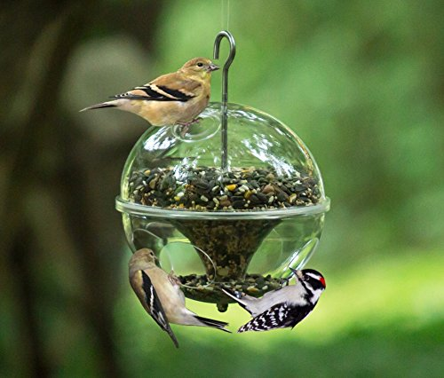 Hanging Wild Bird Feeder, Crystal Clear Acrylic :: Large Outdoor Globe Songbird Feeder, 7.5
