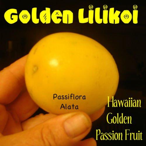 ~GOLDEN PASSION FRUIT~ LILIKOI Passiflora Alata Hawaii se...