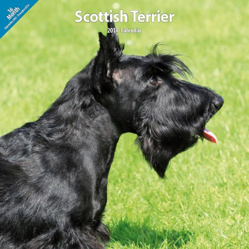 Scottish Terrier 2014 Wall ()