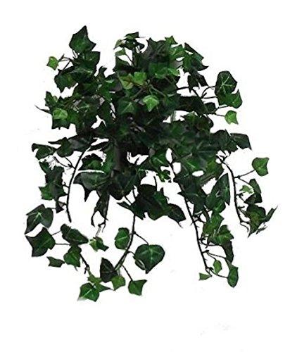 english ivy bush - 5