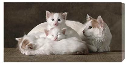 Amazon Com Global Gallery Van Colored White And Red Turkish Angora