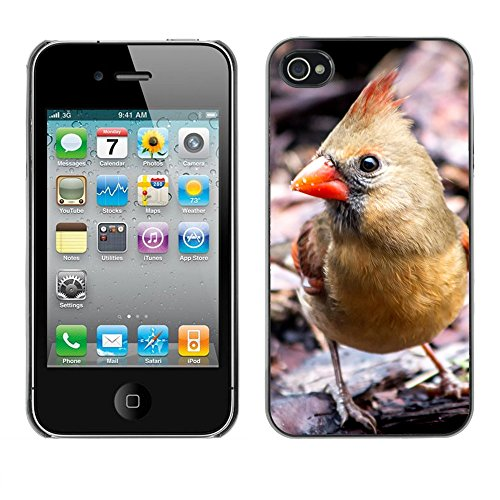Premio Sottile Slim Cassa Custodia Case Cover Shell // F00013829 oiseau // Apple iPhone 4 4S 4G