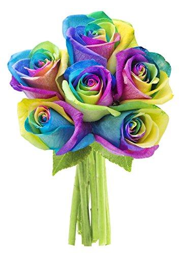 KaBloom Fresh Cut Rainbow Rose Bouquet of 6 Rainbow-Swirl Roses (Farm-Fresh, Long-Stem)