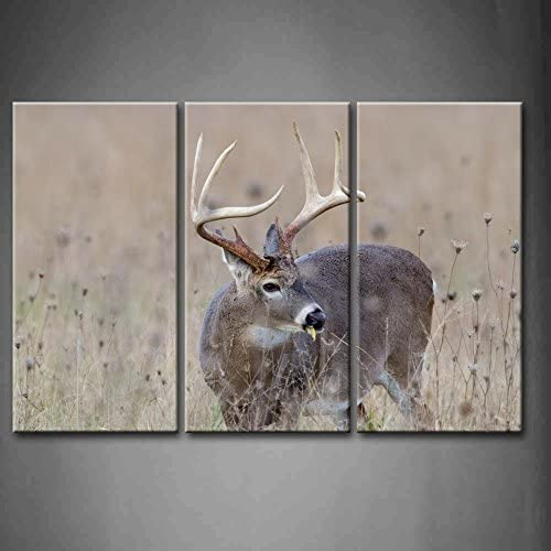 Ready to Hang Deer Buck Picture on Stretched Canvas Wall Art Décor