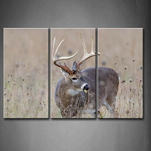 3 Panel Whitetail Deer Buck In A Foggy Field Oil Paintings On Canvas Animal Pictures Modern Wall Art Set, Stretched and Framed (Ready To Hang)