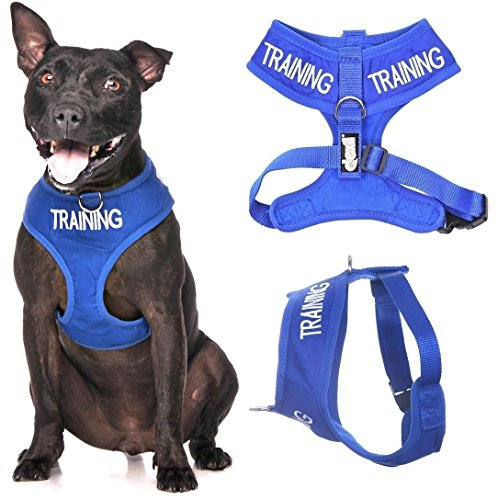 Dexil Limited TRAINING (Dog In Training/Do Not Disturb) Blue Color Coded Non-Pull Front and Back D Ring Padded and Waterproof Vest Dog Harness (Medium Harness 19-28inch Chest/Girth)