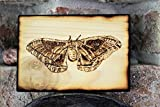 Wood Burned Polyphemus Moth Pyrography Small Woodburned Nature Insect Picture