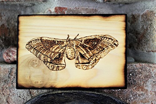 Wood Burned Polyphemus Moth Pyrography Small Woodburned Nature Insect Picture by Hendywood (Image #9)