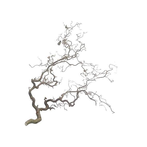 Korkenzieherast (ca. 60 cm lang) mit Sisalseil - Vogelsitzast | Vogelzubehör | hängende Deko | Vogel-AST | Voliere