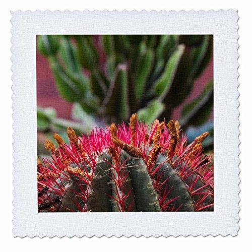 3dRose Danita Delimont - Cactus - Spain, Canary Islands, San Sebastian de la Gomera, cactus detail - 20x20 inch quilt square (qs_257879_8) by 3dRose