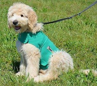 ThunderShirt Classic Dog Anxiety Jacket, Kelly Green, Medium