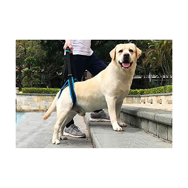Tineer Dog Lift Harness for Back Legs Pet Support Harness Rear Sling Help Weak Legs Stand Up Support Balance Harness for… Click on image for further info. 7