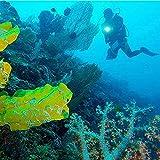 WINDFIRE Scuba Diving Flashlight Dive Torch Light