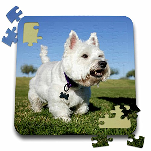 Danita Delimont - Dogs - A Terrier playing out in the field. Phoenix, Arizona, USA, PR. - 10x10 Inch Puzzle - Pr Usa