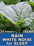 Rain White Noise for Sleep 10 Hours ASMR