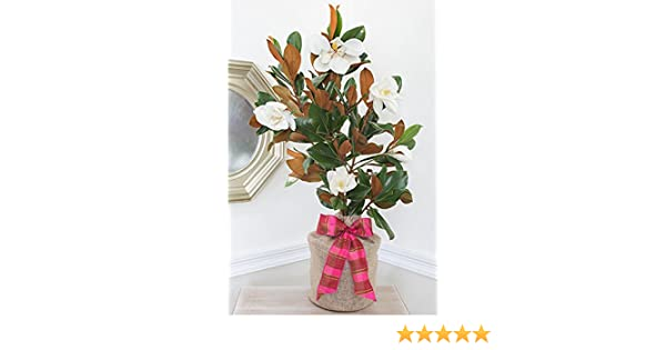 Amazoncom Southern Magnolia Housewarming Gift Tree By The