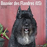 Bouvier des Flandres (US) Calendar - Dog Breed Calendars - 2017 - 2018 wall Calendars - 16 Month by Avonside