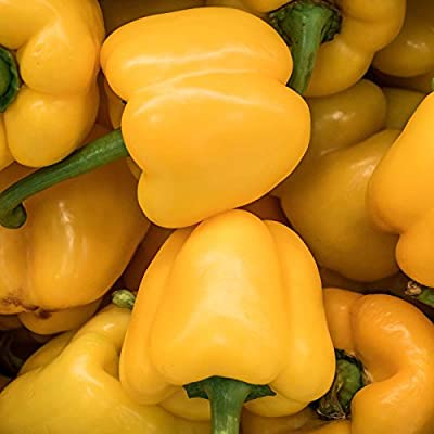 Mini Bell Yellow Sweet Pepper Garden Seeds - 500 Seeds - Non-GMO Vegetable Gardening Seeds