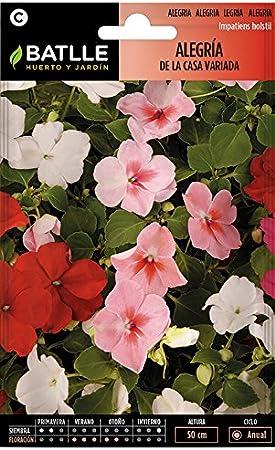 Semillas de Flores - Alegría de la Casa Impatiens Híbrida variada - Batlle: Amazon.es: Jardín