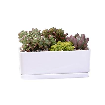 Amazon Com White Ceramic Rectangular Flower Pot 6 5 Inch Modern
