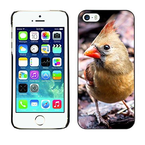 Premio Sottile Slim Cassa Custodia Case Cover Shell // F00013829 oiseau // Apple iPhone 5 5S 5G