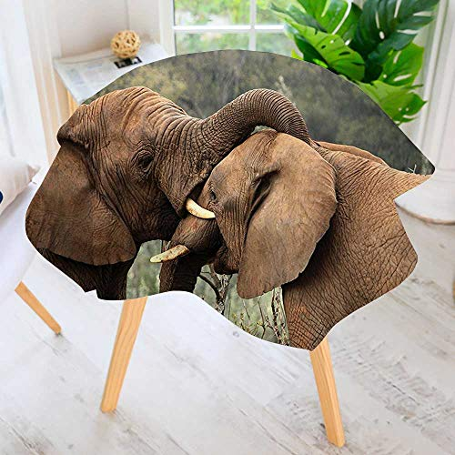 - UHOO2018 Round Tablecloth-Two Wild Savanna Elephants Wrestling Cute Nature Icons South African Animals Game Photo Waterproof Wine Tablecloth Wedding Party Restaurant 71