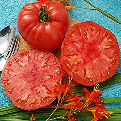 Giant Syrian Tomato Seeds - 1-3 lb. red, gorgeous, meaty, heart-shaped tomatoes (10 - Seeds) : Garden & Outdoor