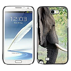 Etui Housse Coque de Protection Cover Rigide pour // M00110424 Elefante colmillo de marfil animal // Samsung Galaxy Note 2 II N7100