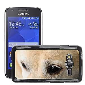 Etui Housse Coque de Protection Cover Rigide pour // M00115028 Perro Labrador Ojo Canidae Animal // Samsung Galaxy Ace4 / Galaxy Ace 4 LTE / SM-G313F