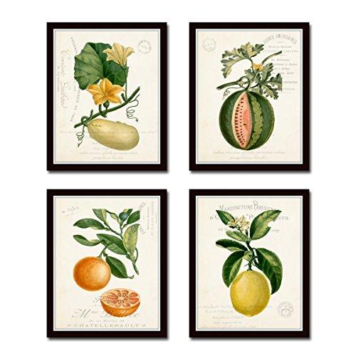 French Fruit Botanical Print Set No.13 French Fruit Giclee Fine Art Prints - Unframed
