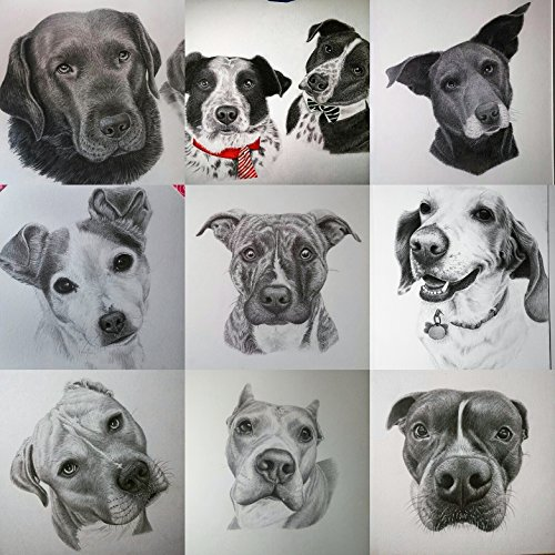 6'' x 6'' Custom, Hand-Drawn Dog Portrait by Tammy Liu-Haller ~ Pencil Artist